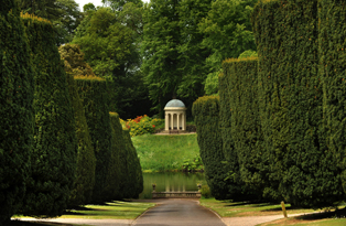 Yew tree walk at Hillsborough Castle