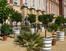 Exotic plants at Hampton Court Palace.