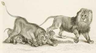 LionsMenagerie