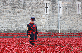 A Yeoman walks amongst the poppies at the Tower