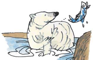 Polar bear illustration by Tim Archbold
