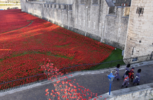 Aerial view of the Blood Swept Lands and Seas of Red poppies installation